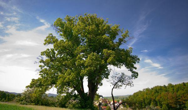 Going. | Rodzina Na Drzewie - Muzeum im. Emeryka Hutten-Czapskiego