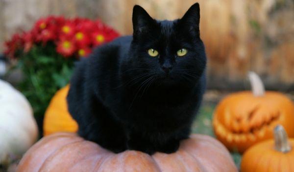 Going.   Halloween Party - Czarny Kot