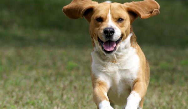 Going. | ŁAPA TARG - targi akcesoriów dla psów, warsztaty dla właścicieli - Mysia 3