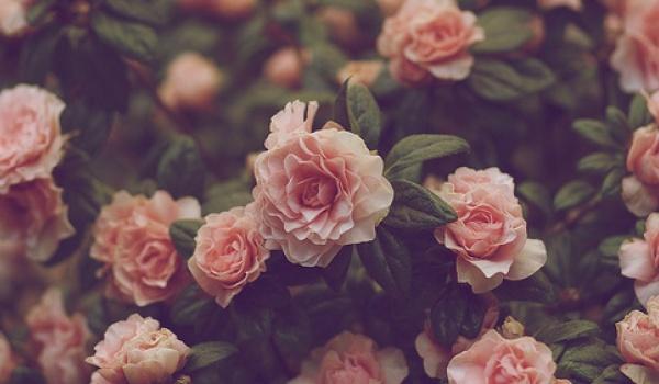 Going. | Walentamilki™: Love Needs No Motto - Zet Pe Te