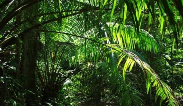 Going. | Jungle Is Massive - Sfinks700