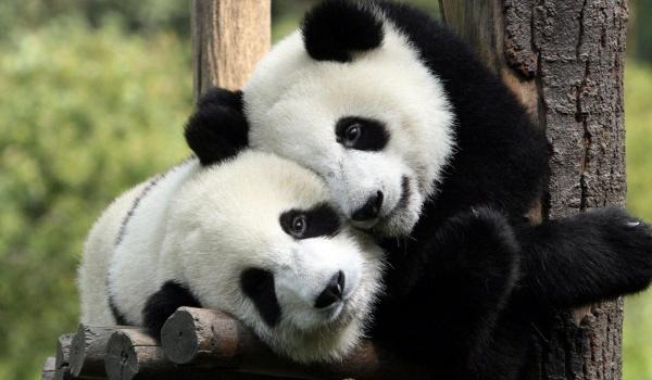 Going. | Poranki z pandą