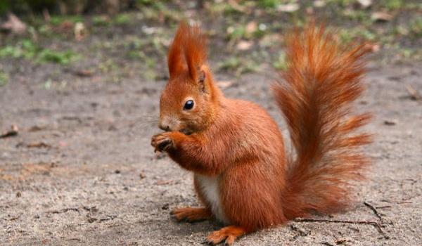 Going. | U wiewiórki w dziupli - zajęcia dla dzieci w Minitece - Biblioteka Sopocka