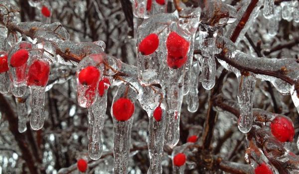 Going. | Dzieci I Zimowe przysmaki