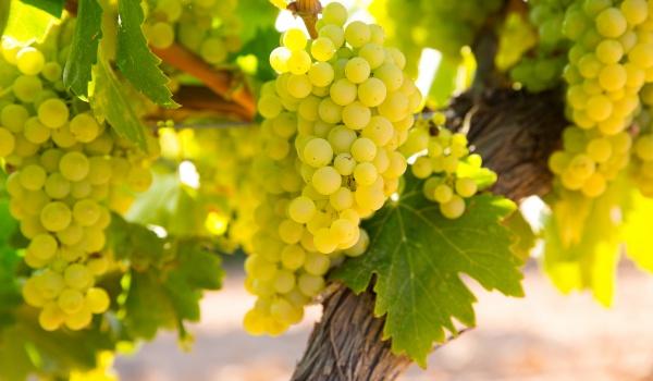 Going. | Wieczór wina z wine barem Dwa Przez Cztery - Chardonnay
