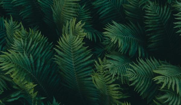 Going. | Dźwięki roślin