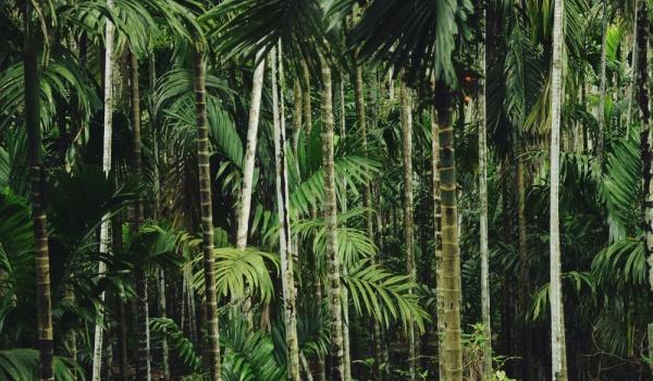 Going. | Concrete Jungle - INQbator Klub