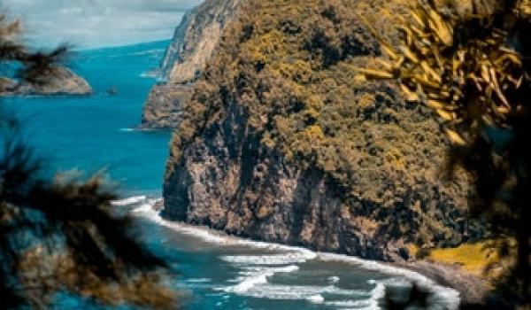 Going. | Hawajskie spotkania na Łazarzu - Inkubator Kultury - Pireus