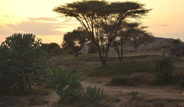 Going. | Świat i okolice – Etiopia, kraj o wielu obliczach - Centrum Kultury Dwór Artusa