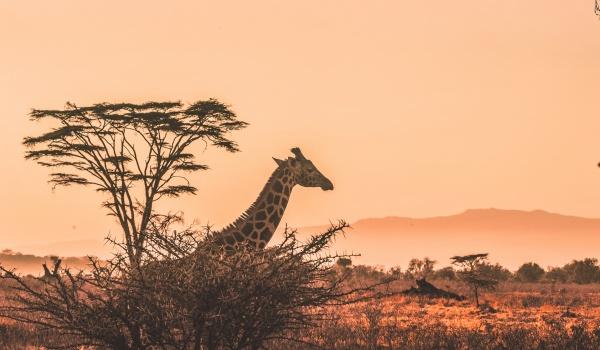 Going. | Dzień Afryki - MÓZG