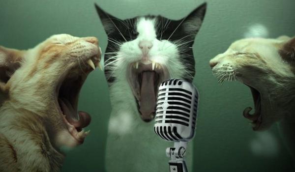 Going. | Zwierzakowe karaoke - Żarty Żartami