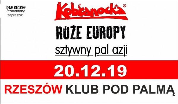 Going. | Kobranocka | Róże Europy | Sztywny Pal Azji - Pod Palmą