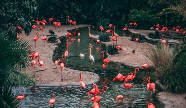 Going.   Inwazja Flamingów w Radości! - Radość