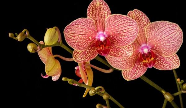 Going.   Międzynarodowa Wystawa Orchidei, Bonsai i Sukulentów - Międzynarodowe Centrum Kongresowe