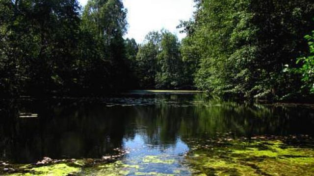 Katowicki Park Leśny