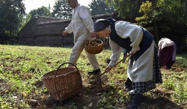 Going. | Święto Ziemniaka - jesień w polu i zagrodzie - Mystictravel