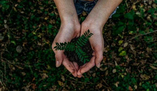 Going. | MaMY zielone pojęcie | Robimy coś z niczego - Wola Park
