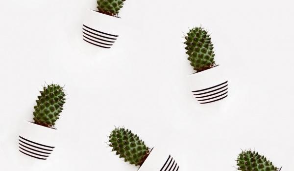Going. | Wystawa kaktusów i sukulentów - Łódzki Dom Kultury