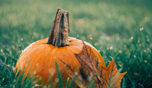 Going. | Baj jesienny - Tapataj Klubokawiarnia