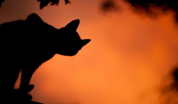 Going. | Halloween x Bacardi - Niebo