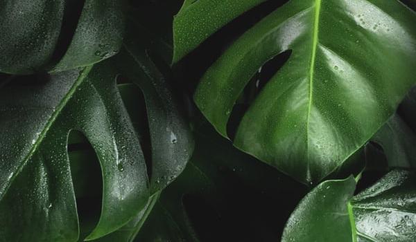 Going. | Rośliny a powietrze | wykład Sebastiana Kulisa - UrbanLab Gdynia