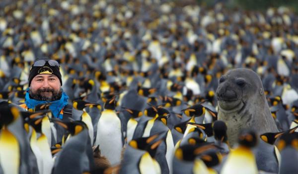 Going.   Pingwiniątka i białe misie - Dom Spotkań z Historią