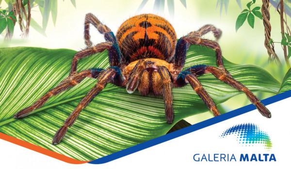 Going. | Wystawa pająków w Galerii Malta - Galeria Malta