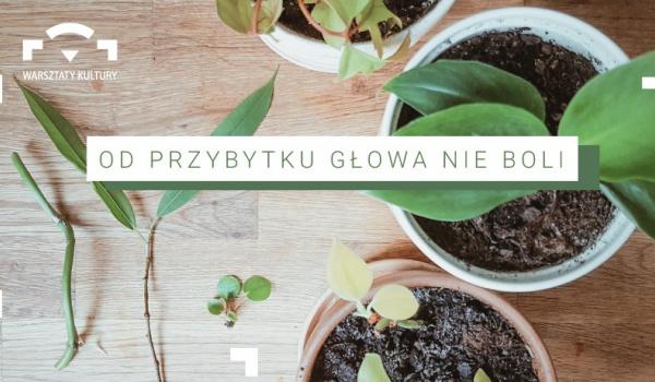 Going. | Od przybytku głowa nie boli! Live o rozmnażaniu roślin :) - Online | Warsztaty Kultury
