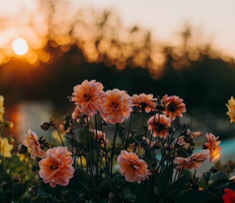 Ogrodowe inspiracje – warsztaty edukacyjne online
