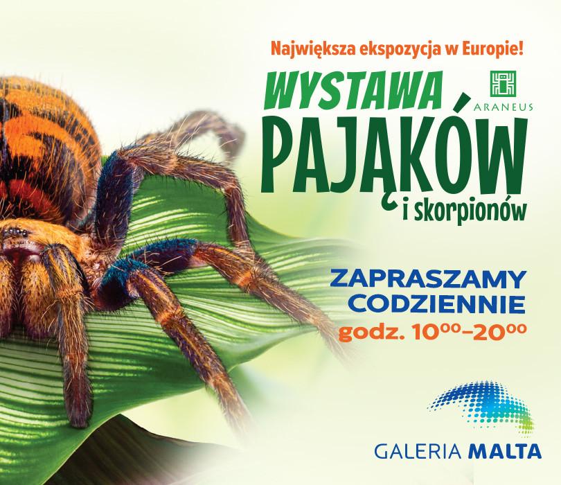 Wystawa pająków w Poznaniu – Galeria Malta [OTWARTE OD 5.02]