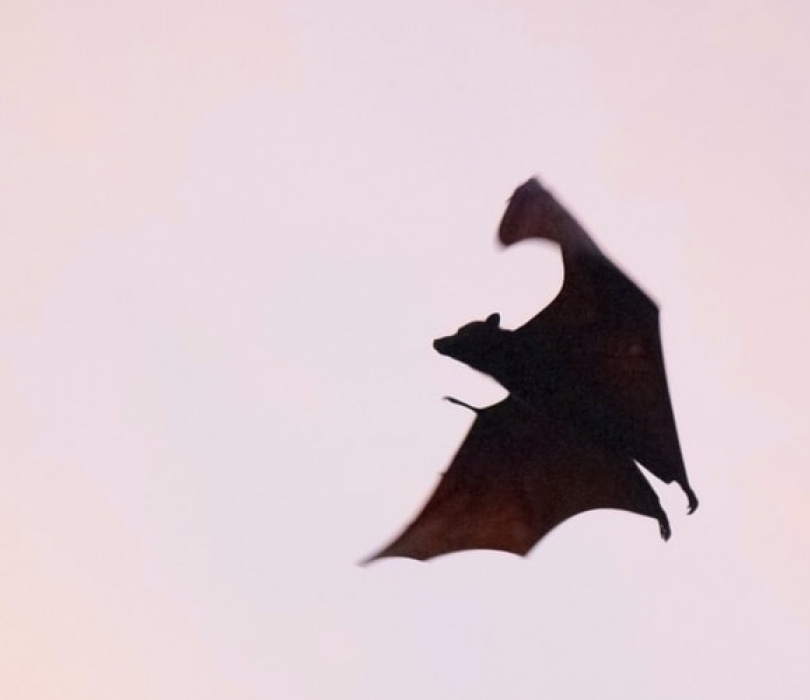 Czy Polacy wymyślili wampiry? | spotkanie online